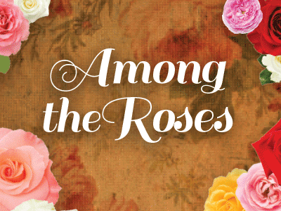 among the roses promo 2017